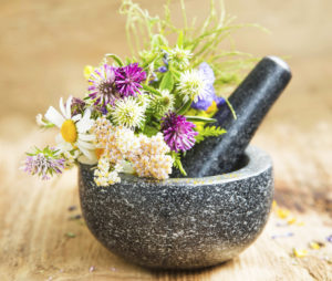European Herbal Medicine Legacy & Tradition